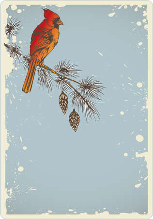 pine branch: Vintage Christmas background with pine branch and cardinal bird