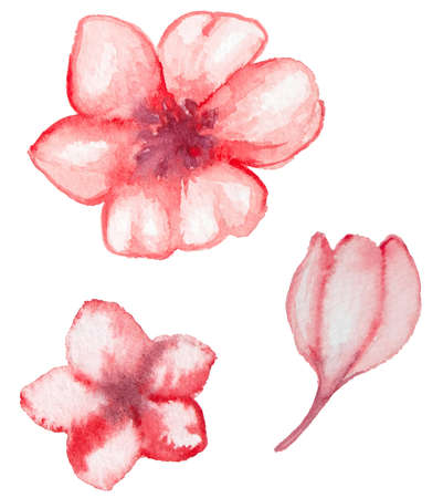 red pink: Set of vector watercolor red flowers
