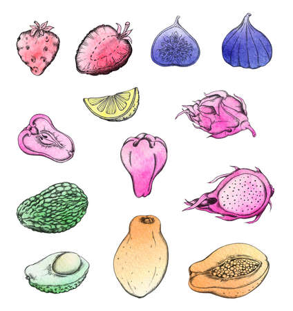 tropical: Set of hand drawn watercolor tropical fruits. Stock Photo