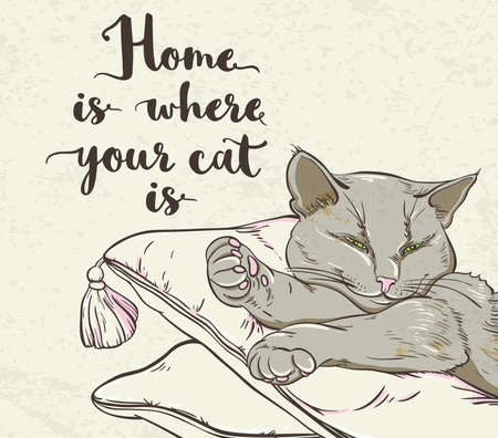 beautiful homes: background with cat sleeping on a pillow and lettering. Illustration