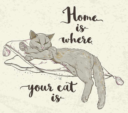 pillows: background with cat on pillow and lettering.