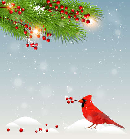 Winter landscape with cardinal bird in snow, green fir branches and red berries. Christmas background.