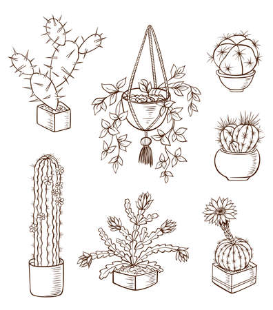 houseplant: Set of various houseplants on a white background. Hand drawn vector illustration.