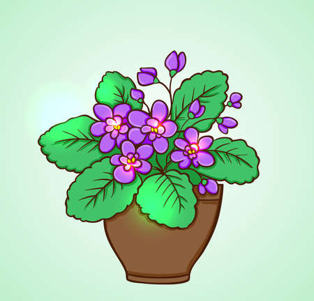 flowerpots: Blooming violets in a flowerpot on a green background. Hand drawn vector illustration. Illustration