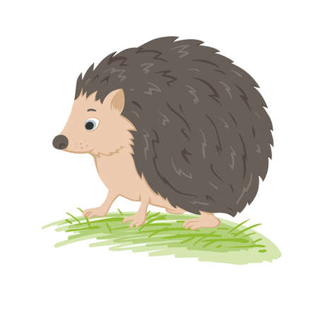 Cute vector  forest hedgehog in a green grass on a white background