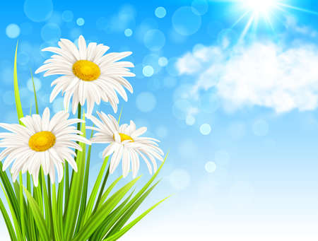 White daisy flowers, green grass and clouds on a blue sky background. Spring floral background. Vector illustration.