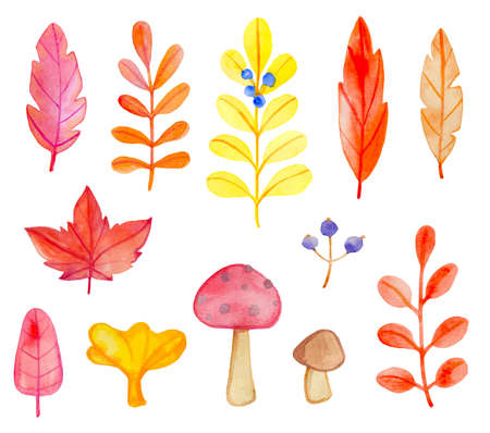 Set of vector watercolor leaves and mushrooms on a white background. Hand drawn botanical autumn design elements