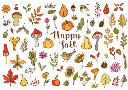 Autumn doodle vector design elements. Hand drawn florals, leaves, mushrooms and pumpkins on a white background