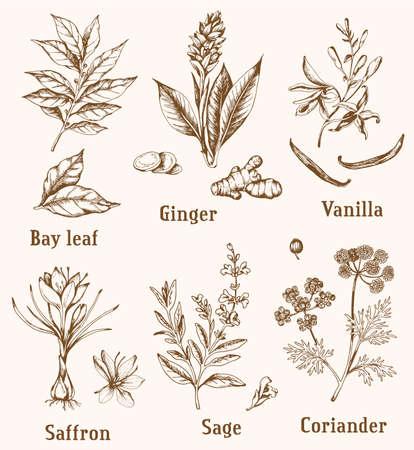 Set of vintage vector hand drawn spices and herbs. Vektorgrafik