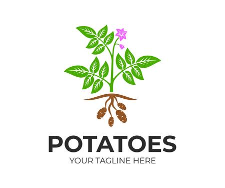 Landwirtschaftliche Pflanzkartoffeln mit Blumen und Früchten, Logo-Design. Organische und natürliche Kartoffelpflanze und -nahrung, rustikales oder landwirtschaftliches Feld mit Kartoffeln, Vektordesign und Illustration