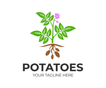 Agricultural plant potatoes with flowers and fruits, logo design. Organic and natural potato plant and food, rustic or farming field with potatoes, vector design and illustration