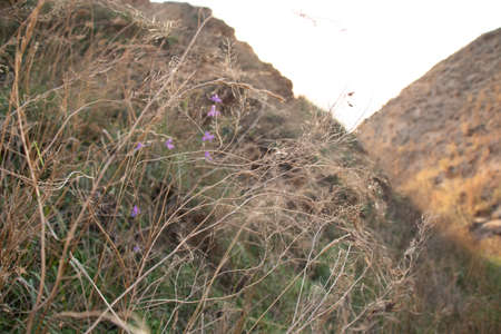 Flowers in dry grass among the hills, photo. Nature, wildlife and landscape, photo