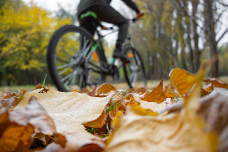 Low angle view of man riding a mountain bike in the park
