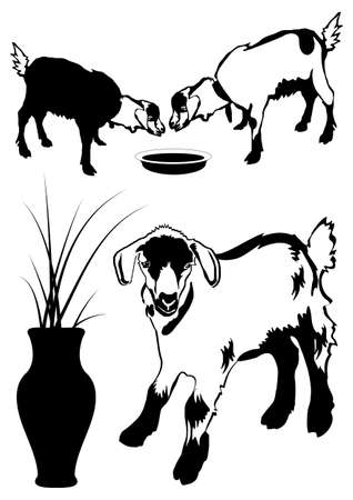 goats silhouette on the white background Stock Vector - 14689643