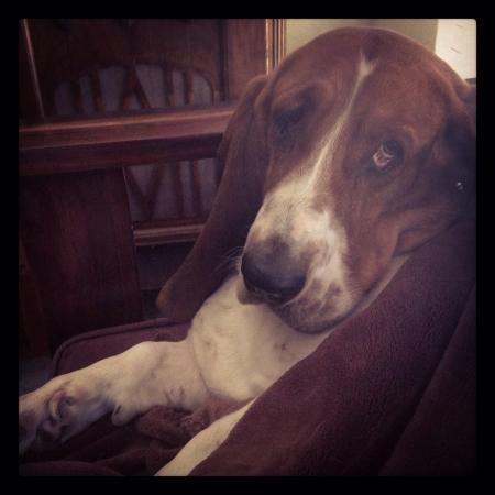 otganimalpets01: Lonely dog