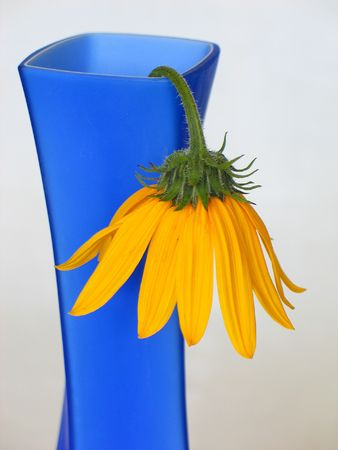 floret: Blue vase and yellow flower Stock Photo
