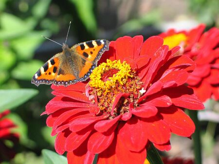 Flower and butterfly photo