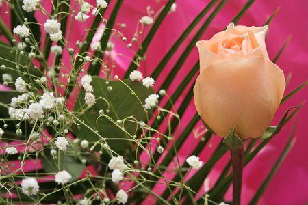 incarnadine: Pink rose