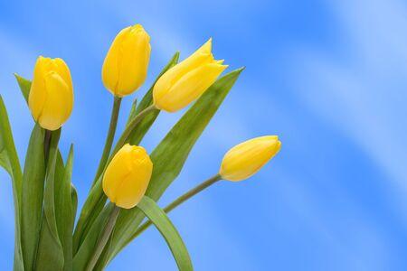 donative: Bouquet Tulip