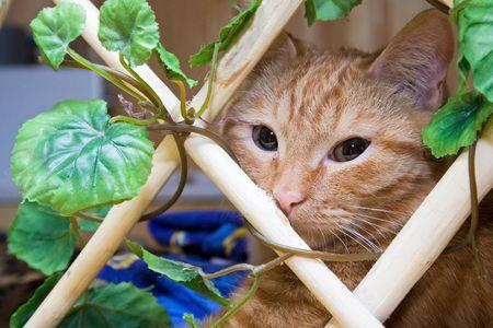 catfood: Gatto di Redhead per grata