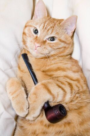sweetly: Redhead cat with pipe