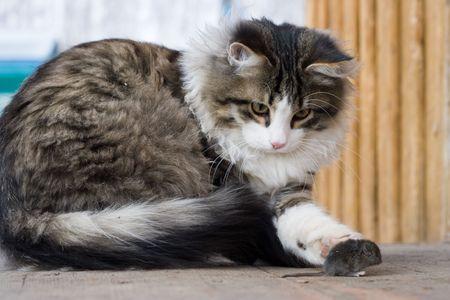 catfood: Gatto e topo Archivio Fotografico
