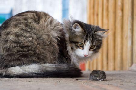 catfood: E di gatto e topo  Archivio Fotografico