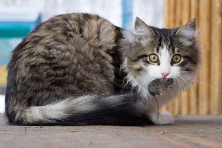 catfood: Gatto e mouse Archivio Fotografico
