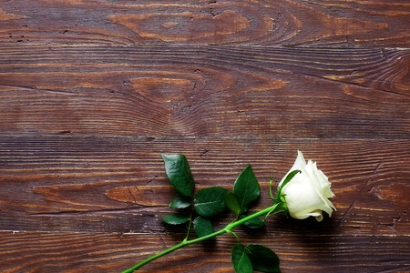 White rose on wooden dark background with place for textual