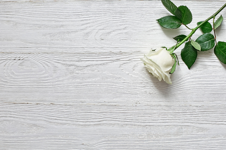 Rose on white wooden background. Place an inscription, text or message