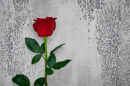 Red roses on a light textured background. Place for text, top view. Reklamní fotografie