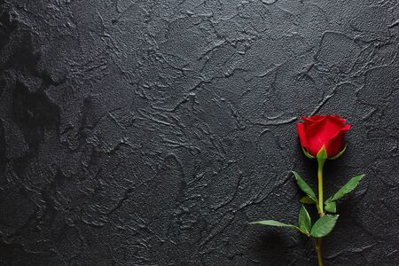 Red rose on a black background. Empty space for emotional, quotes or sayings.