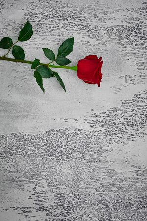 Red roses on a light textured background. Place for text, top view.