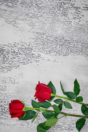 Red roses on a light textured background. Place for text, top view. Imagens