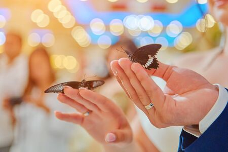 Beautiful live butterflies sit on the hands of the bride and groom, on the background of the wedding Banquet.
