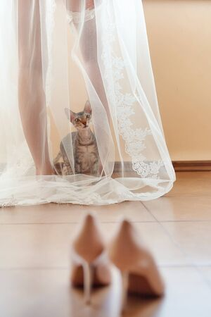 Funny curious cat sits under the brides veil in the morning and looks at the wedding shoes.