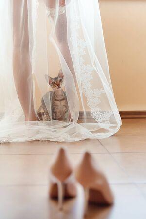 Il gatto curioso e divertente si siede sotto il velo della sposa al mattino e guarda le scarpe da sposa. Archivio Fotografico