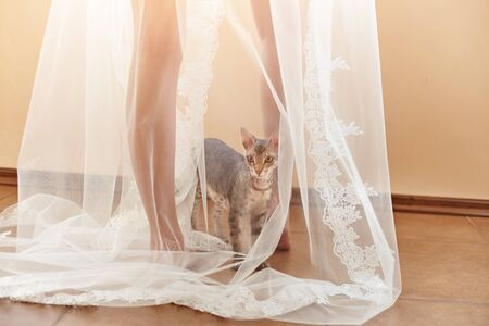 Funny cat climbed under the veil of the bride.