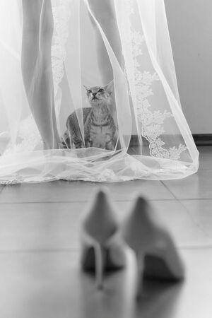 Curious funny cat came to his mistress bride, and climbed under her transparent veil. Banco de Imagens
