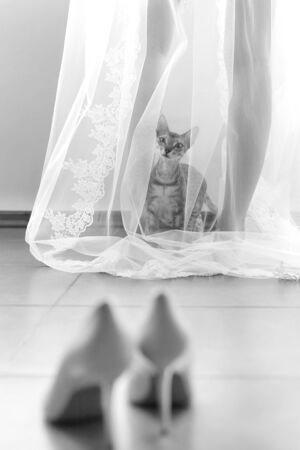 Curious funny cat came to his mistress bride, and climbed under her transparent veil. Imagens