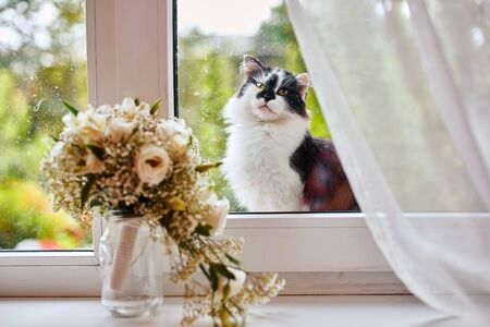 A lonely street cat jumped on the windowsill and sadly looks inside the room, where the window is the brides bouquet. Zdjęcie Seryjne