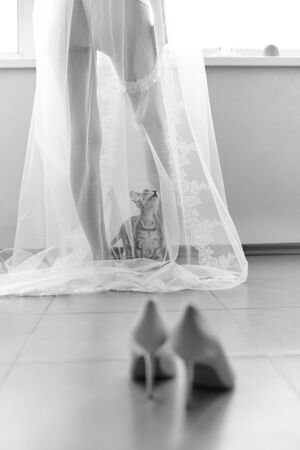 Curious funny cat came to his mistress bride, and climbed under her transparent veil