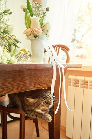Cute curious cat playing with ribbons from the brides wedding bouquet and grooms boutonniere. Zdjęcie Seryjne