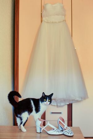 Funny curious cat next to the wedding dress of his mistress.