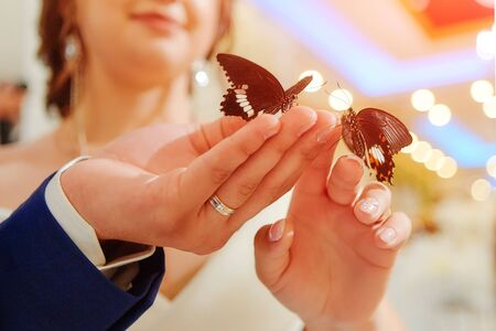 Exotic butterfly. Beautiful live butterflies sit on the hands of the bride and groom. Received as a gift at the wedding Banquet.
