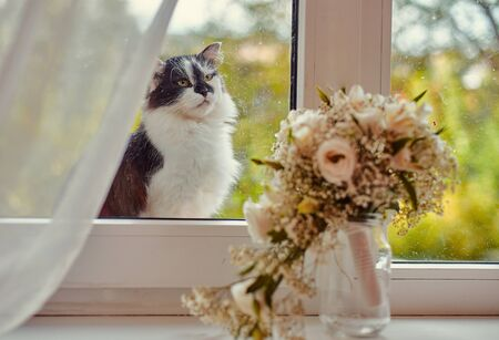 A lonely street cat jumped on the windowsill and sadly looks inside the room, where the window is the brides bouquet. Imagens