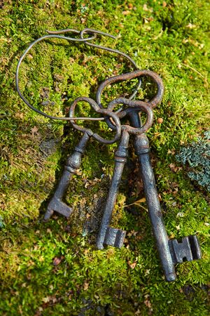 A bunch of old iron keys lying on The forest moss, close-up.