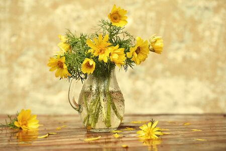 Spring still life. A bouquet of yellow Adonis flowers in a glass jar after the rain, all in drops of water. Copy space, selective focus.