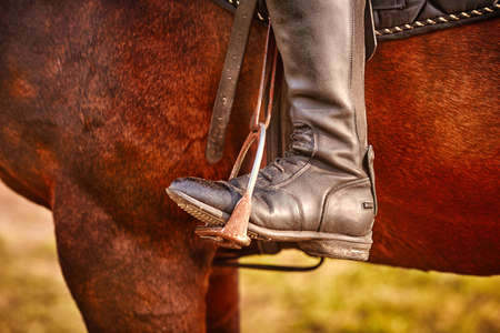 Dressage, rider on a horse, close-up of the riders Shoe in the stirrup, detailed photo