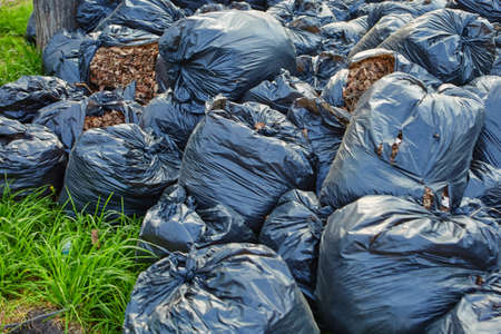 Fallen autumn leaves gathered in biodegradable plastic bags. Black plastic garbage bags in the park, autumn cleaning ..